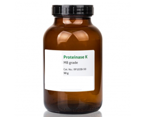 High Quality Proteinase K Powder